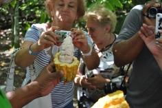 Republica Dominicana -Eco Caribe Tour-interiorul unui fruct de cacao